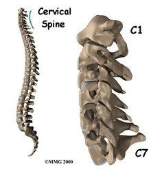 Cervical Spine Vertebrae- C1, C2, C3, C4, C5, C6, C7 - Neck nerves