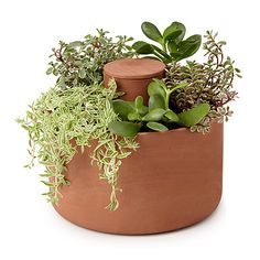 Look what I found at UncommonGoods: self watering planter... for $50 #uncommongoods
