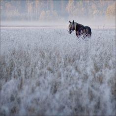Meadow on a misty morning by vladmar