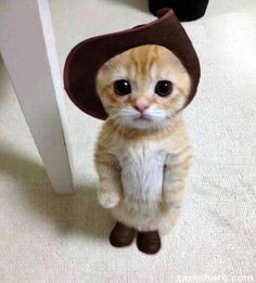 May I go to the party meow?