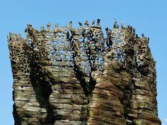 ursula von rydingsvard - outdoor exhibit