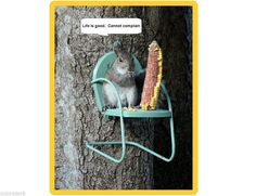 squirrel chair- i would do this for the chipmunks or the birds Garden Art, Home And Garden, Garden Deco, Garden Design, Funny Animals, Cute Animals, Baby Animals, Tier Fotos, Hamsters
