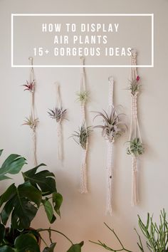 how to display air plants pop shop america