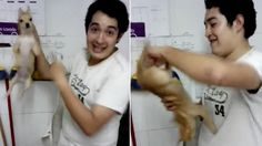 Fire pet shop employee filmed pounding dog repeatedly! | YouSignAnimals.org