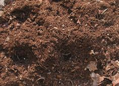 Use Mother Nature to feed your plants. The best amendment for your soil is one you can make yourself: compost. If you don't already have a compost pile, start one now.
