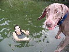"""""""If I jump, do you think she will catch me?  She loves it when I play with her, but I don't want to get my hair wet!"""""""