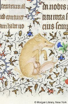 Book of Hours, MS M.1004 fol. 154r - pig, sitting up, suckling two young, in lower margin. Text from Mass of the Holy Spirit.