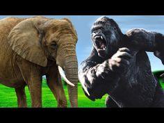 Colors Animals Finger Family | Finger Family Nursery Rhymes | Daddy Finger Family Song | Kids Songs - YouTube