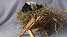 For those who got hay racks as Christmas presents- make sure they're safe!