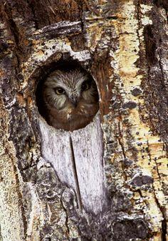 Owl Hollow