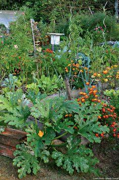 Pieds de tomate dans le potager du prieur d 39 orsan france for Calendrier du jardin potager