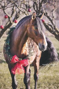 My beloved Opositor and I wish you a very Merry Christmas and a wonderful May all your dreams come true! Cute Horses, Pretty Horses, Horse Love, Beautiful Horses, Christmas Horses, Christmas Animals, Christmas Dog, Merry Christmas, Pictures With Horses