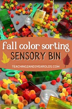 This fall sensory bin for preschoolers builds color recognition skills as the pom poms are transferred to matching colored containers. #fall #autumn #finemotor #colors #sorting #matching #sensory #2yearolds #3yearolds #teaching2and3yearolds Fall Sensory Bin, Sensory Bins, Sensory Activities, Fall Activities For Toddlers, Autumn Activities, 3 Year Olds, Autumn Art, Pom Poms, Fine Motor