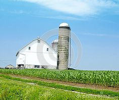 A picture of a white house in a middle of corn field and silo