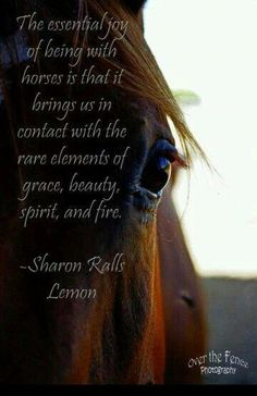 Horses bring a quick exhiliration and joy to everyone they come in contact with. This might be part of the reason why horses heal hearts Equine Quotes, Equestrian Quotes, Equestrian Problems, Horse Girl, Horse Love, Inspirational Horse Quotes, Horse Riding Quotes, Animal Reiki, Cowgirl Quote