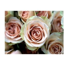 Giver her roses that will last forever. Kathy Yates 'Pale Pink Roses' canvas art is available in three sizes.