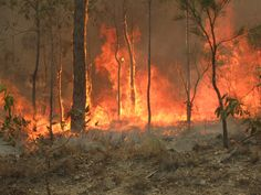 Three boys have allegedly been caught setting fires in Australia south of Sydney in Wollongong, the third largest city in New South Wales. Australian Plants, Australian Bush, Queensland Australia, Australia Travel, Facts About Australia, Bushfires In Australia, Fire Image, 12 Year Old Boy, Archaeology News