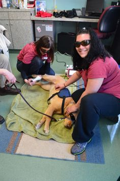 Stoney Creek Veterinary Hospital is excited to offer our clients Companion Laser Therapy. Laser therapy provides a non-invasive, pain-free, surgery-free, drug-free treatment which is used to treat a variety of conditions and can be performed in conjunction with existing treatment protocols.