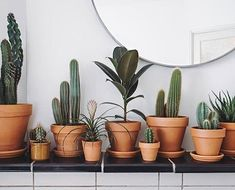 green thumb best plants to keep in your bedroom better sleep tips Choosing Between Gazebo Kits and G Potted Plants Patio, Home Garden Plants, Indoor Plants, Home And Garden, Best Plants For Bedroom, Bedroom Plants, Wooden Gazebo Kits, Fig Bars, Gazebo Plans