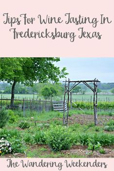 Tips For Wine Tasting In Fredericksburg Texas http://www.wanderingweekenders.com/2016/06/15/tips-wine-tasting-fredericksburg-texas/