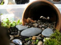 Make a fairy garden with a few pots, shells and stones. Perhaps you'll catch a fairy if you leave it overnight.