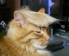 They Said I Could Be Anything...So I Became Donald Trump | They Said I Could Be Anything…Cat Edition
