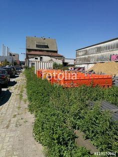 Mit Unkraut übersäter Gehweg im Gewerbegebiet am Mittelhafen in Münster in Westfalen im Münsterland