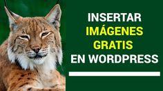 🖼 Cómo insertar imágenes GRATIS en WordPress | WordPress para Novatos