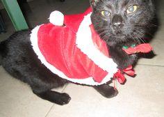 #cat #lovemycat #mili #christmas #blackcat