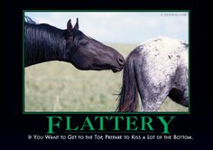 Flattery - Horses Funny - Funny Horse Meme - - If you want to get to the top prepare to kiss a lot of the bottom. The post Flattery appeared first on Gag Dad. Horse Meme, Funny Horses, Horse Humor, Funny Animals, Horse Posters, Animal Posters, Demotivational Posters, Funny Signs, Funny Photos