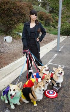 Corgis are arguably the superheroes of the dog world.