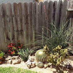 Cactus Garden Ideas 56 best cactus garden ideas images on pinterest Carlos Javiers Garden Proyectcactus Garden