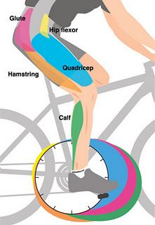 Neat visual showing where your body uses which leg muscles on a #bike. #YMCA