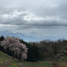 "@fivestar77777's photo: ""うっすら有明山… #空#雲#桜#小雨"""