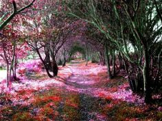 Magical Tree Tunnel, Sena, Spain