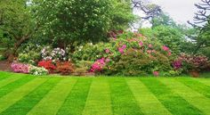 Our McKinney mowing services are the best because we know how to make a lawn look good. We're meticulous when it comes to mowing and trimming. Landscaping Trees, Front Yard Landscaping, Residential Landscaping, Landscaping Contractors, Ideas Para El Patio Frontal, Lawn Service, Garden Maintenance, Green Lawn, Lawn Care