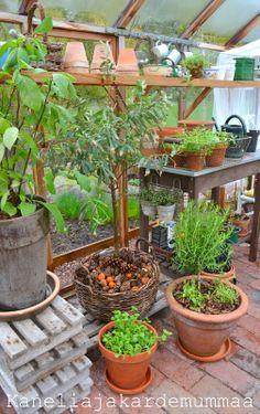 Hydroponic Plants, Greenhouse Gardening, Fruit Garden, Garden Pots, Little Green House, Homemade Greenhouse, Garden Compost, Vegetable Gardening, Garden Cottage