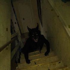 Open your basement door to go down the steps and see this thing coming up. It's brown trousers time!