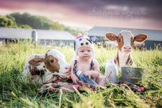 Baby Cows on a farm photo shoot