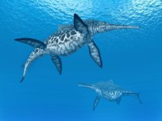 Amateur Fossil Hunter Discovered Complete, 7ft Skeleton Of Ancient Marine Reptile | IFLScience