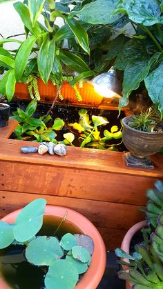 Tetra® Pond — Beauty and the Best Photo Contest entry.  Sowalnut Pov – I have a small above ground red comets goldfish pond I build myself. It might not be the biggest but it sure does stands out.