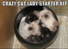 Crazy Cat Lady Starter Kit ~ Funny Cat Pictures (I miss my old cats, but not ready for frisky lil' kittens!)