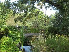 edenfred garden