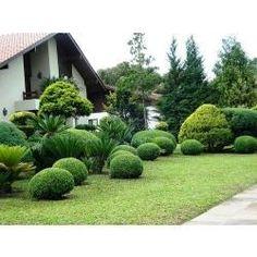 jardim tropical com tuia - Pesquisa Google