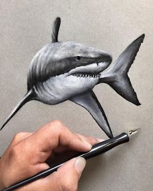 Every tattoo could have a different meaning depending with the symbol which has been used as the principal component in the tattoo. Shark tattoo is usually employed by men. Shark tattoos are a few of the most coveted body arts… Continue Reading → Pencil Drawings, Art Drawings, Drawings Of Sharks, Realistic Animal Drawings, Hai Tattoos, Shark Painting, Shark Pictures, Shark Art, Marine Tattoo