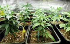 Cannabis Training University - Grow Marijuana