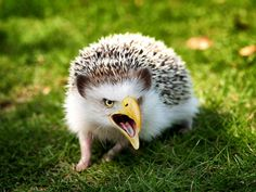 """""""Hybrid Animals"""" – Headgeagle These Animals Got Manipulated On Photoshop, And It's Totally Hilarious • Page 3 of 5 • BoredBug"""