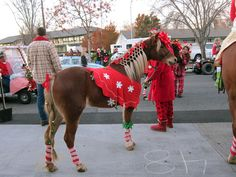 decorating your horse for christmas - Google Search