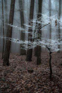 sapphire1707: Frozen Fog II | by Gletscherhorn | http://ift.tt/1wP4vk5
