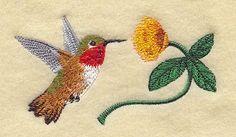 Allen's Hummingbird & Mimosa